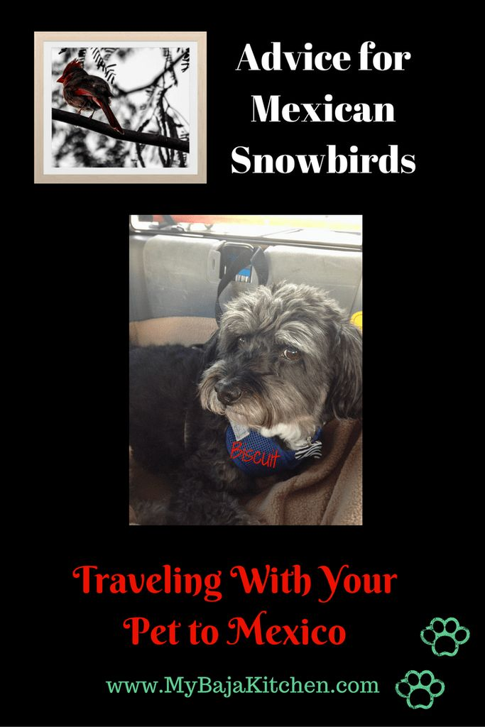 Advice for Mexican #Snowbirds and #Expats, Trvaeking with your pet to Mexico