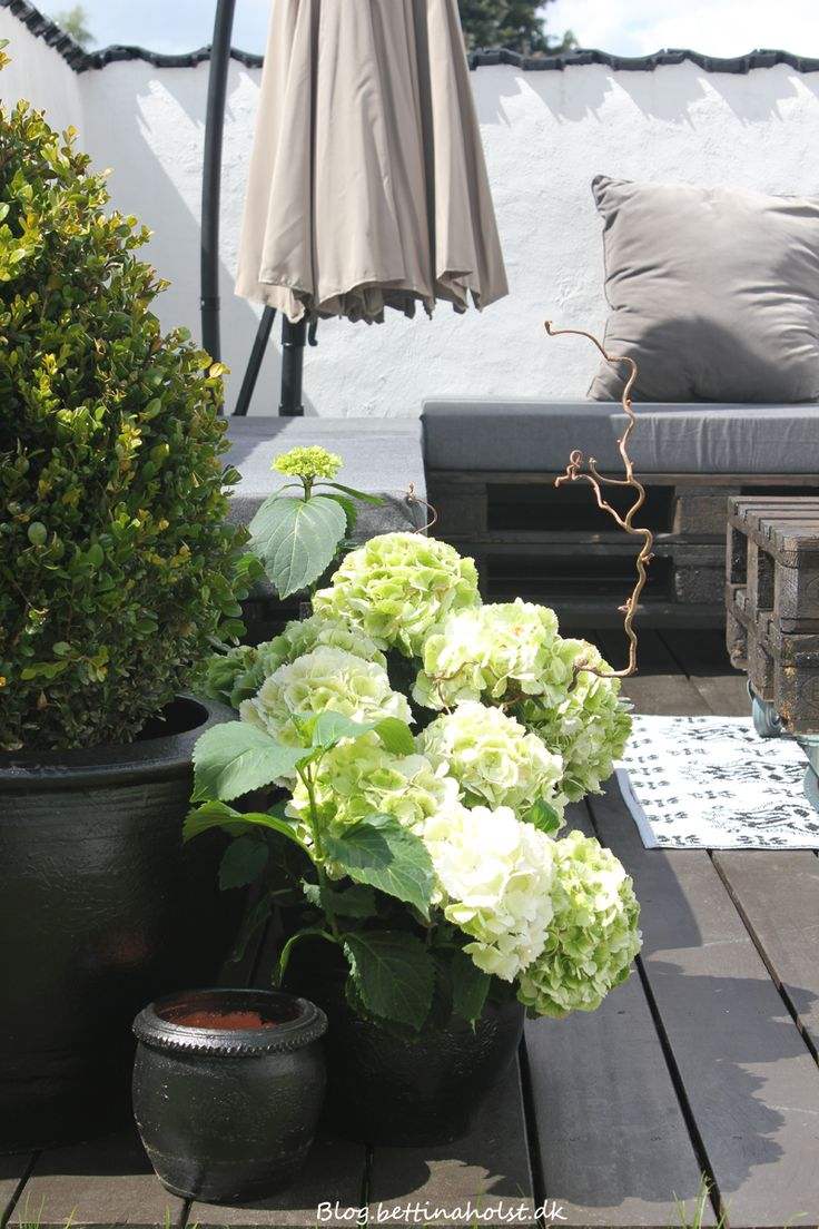 // A small cluster of black pots, some plants with impact a few pallets make for a stylish inviting garden corner... Easy inexpensive to recreate easy to move when you do...