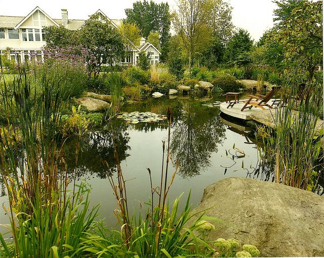 25 best ideas about natural swimming ponds on pinterest for Natural garden pond design