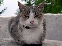 Gatatouille: Tips para eliminar las manchas y el olor producido por la orina de gato