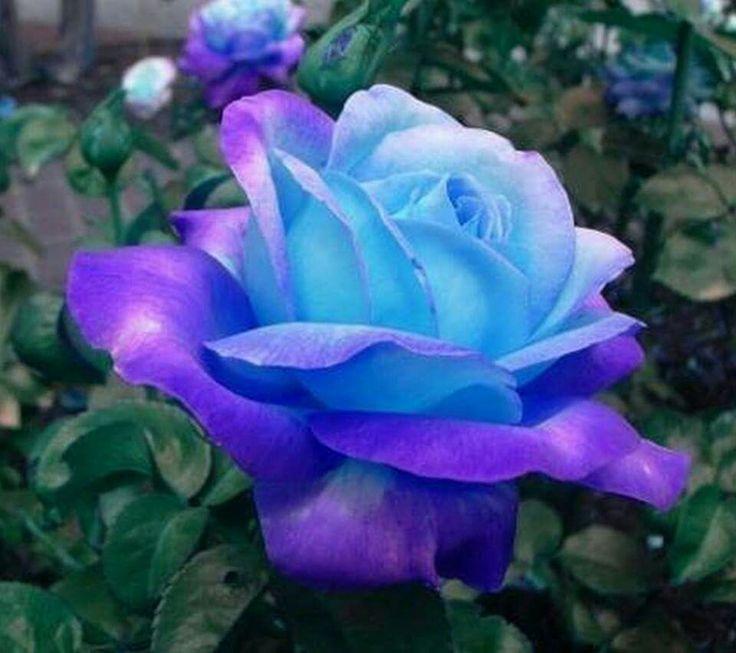 112 best Flowers images on Pinterest   Flowers, Pretty ...