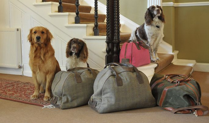 Top Pet Pampering With Pet Friendly Hotels