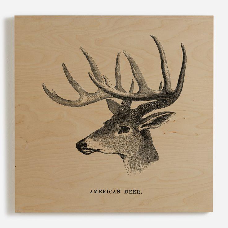 'American Deer'