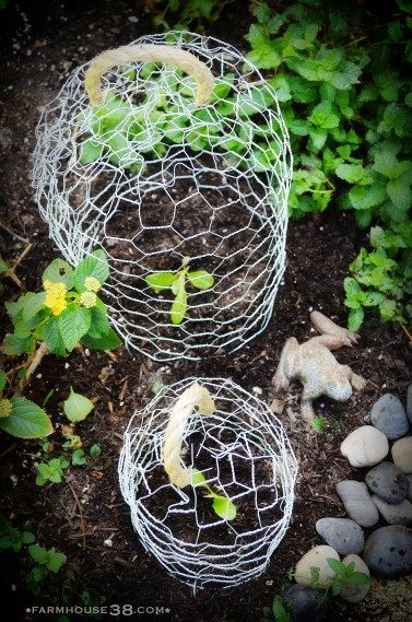 Protective Garden Cloches - how to make. Need these for the new blueberry bushes.