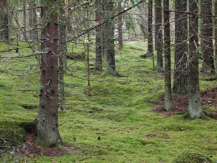 Lahti forest