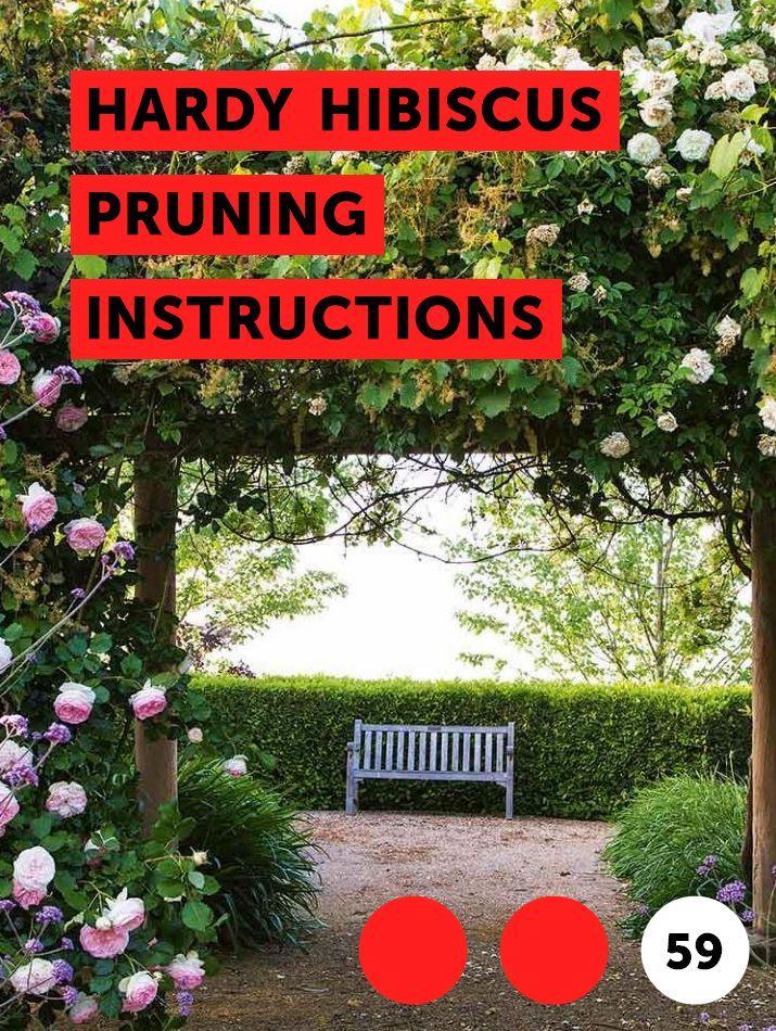 Hardy Hibiscus Pruning Instructions Flower Garden Flowering Plum