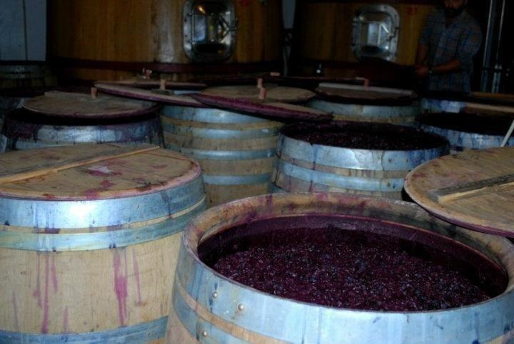 Barriques for fermentation
