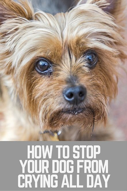 how to stop dog from crying when leaving
