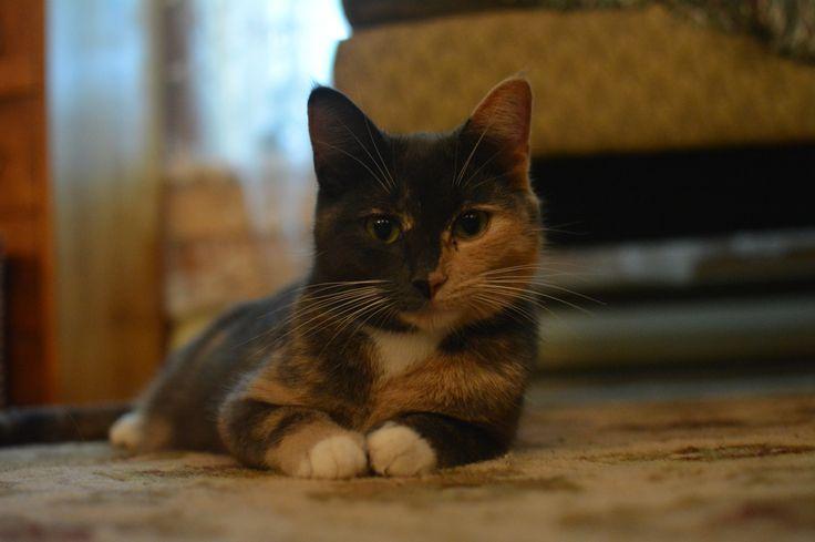 Nadeaus kitty