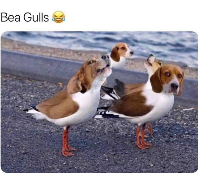 Bea Gulls Realfunny Animals Animal Memes