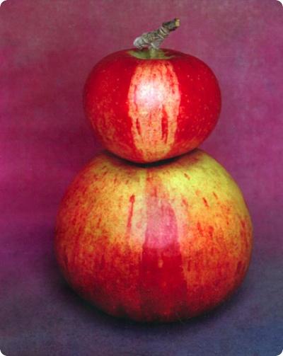 The Apples of My Eye.  Tessa Traeger