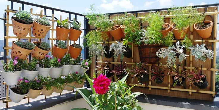 em varanda de cobertura, em PinheirosSP Plantas de sol pleno