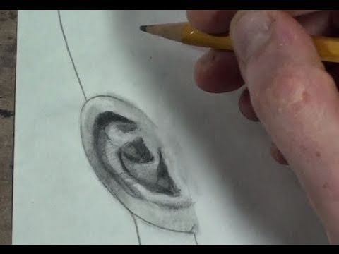 how to draw ears front view