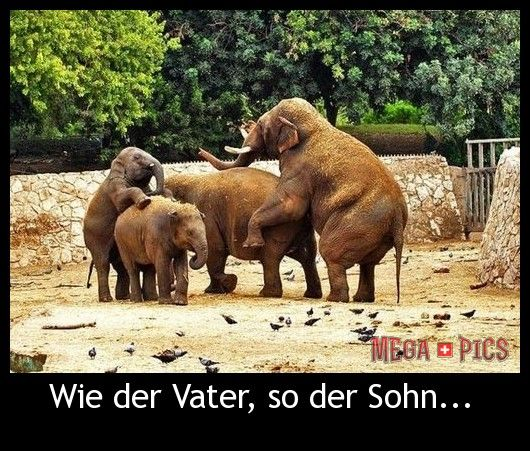 Wie der Vater, so der Sohn... - www.MegaPics.ch. Lustige Bilder, witzige Fotos, fun Pics, fail Videos.