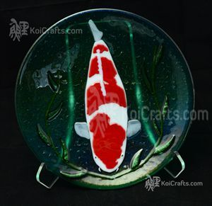 Koi and plates on pinterest for Grand champion koi for sale