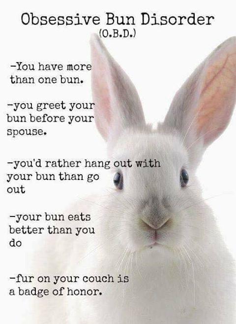 BunSpace.com Forum: Post stuff that shows rabbit's rule!