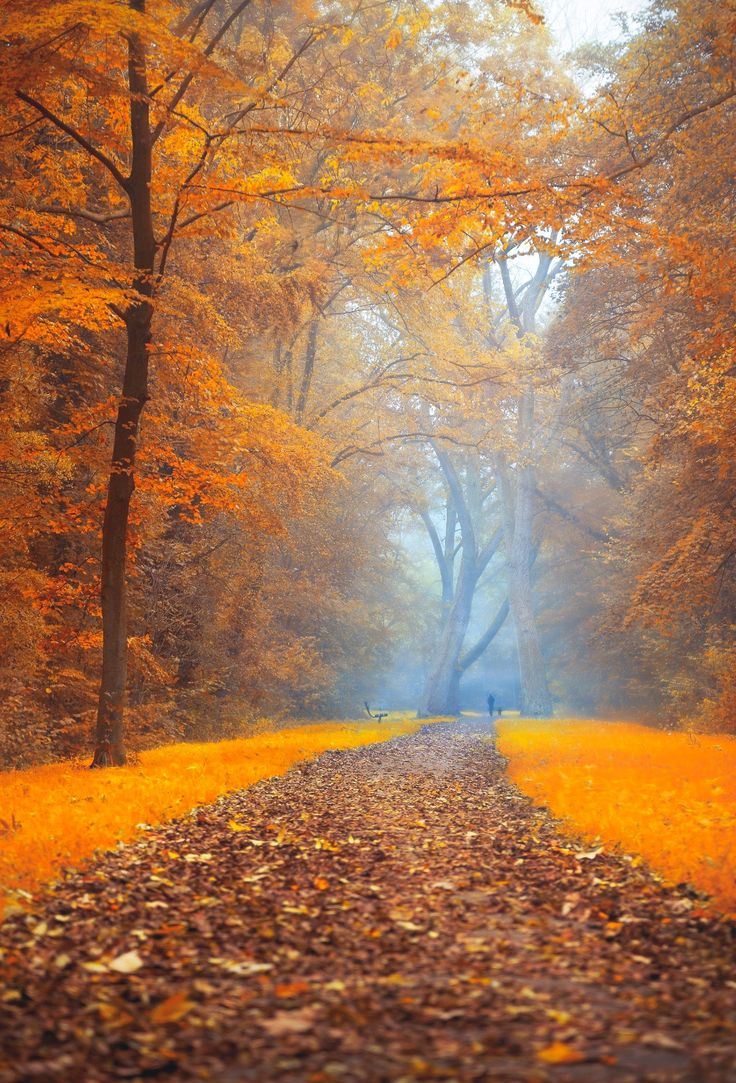 ***Autumn path (Amsterdam, Netherlands) by Thomas Kuipers on 500px E