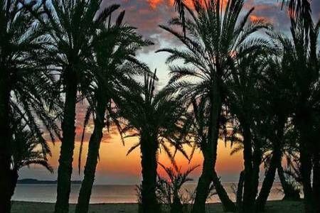 To πολύ γνωστό διεθνώς Φοινικόδασος του Βάι στην πανέμορφη Κρήτη, φιγουράρει από το 1973 στα 19 πιο αισθητικά δάση της χώρας μας.Βρίσκεται σε απόσταση 20 χιλιομέτρων από τη Σητεία της Κρήτης και