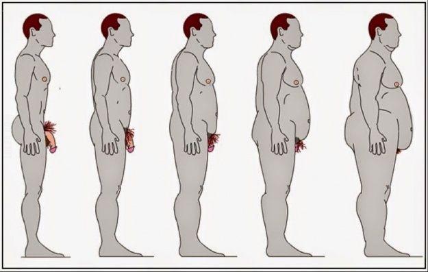 Wpływ otyłości na wielkość penisa #mężczyźni #mały #penis #dlaczego