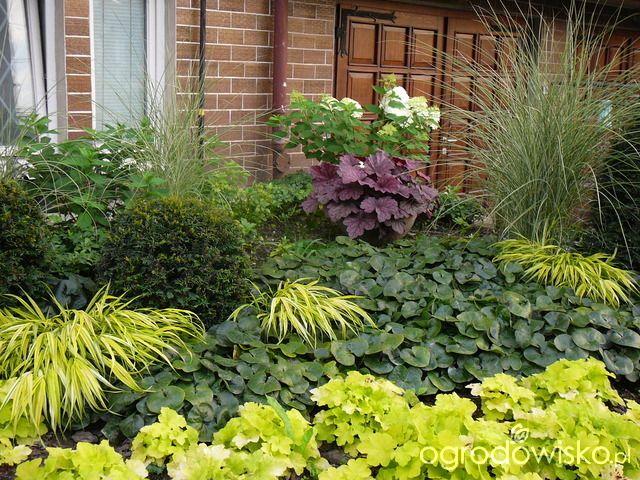 Umiejętne zestawianie roślin, zgrane duety - wyłącznie przykłady kompozycji - strona 7 - Forum ogrodnicze - Ogrodowisko