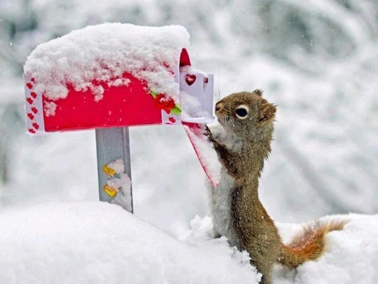 Squirrels Believe in Santa Claus!