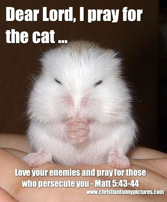 Image result for love your enemies meme