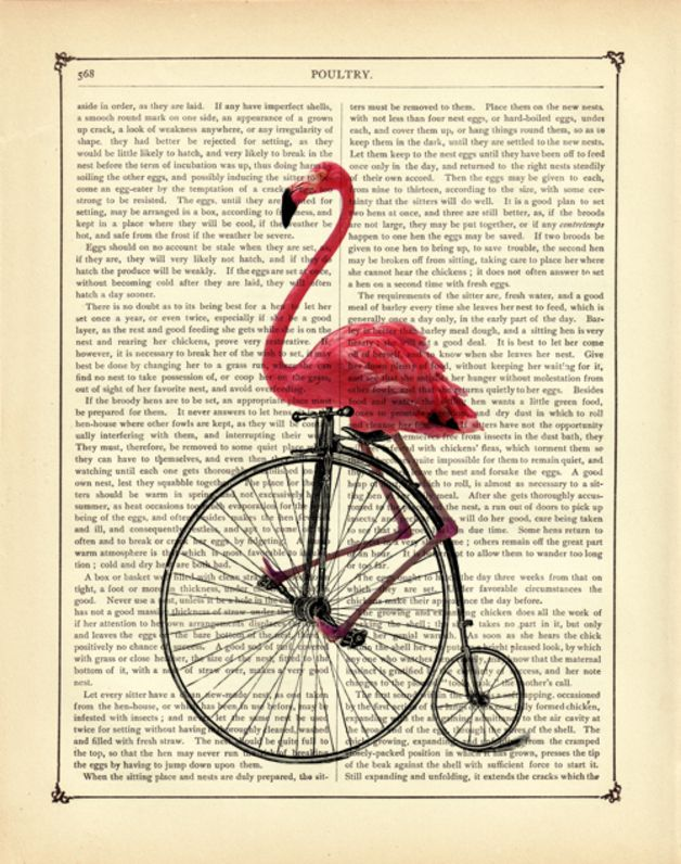*Herrlicher pinker Steampunk Flamingo, der auf einem Einrad fährt - Vogel Zoologie Kunstdruck auf antiker viktorianischer Buchseite*  Diese Kollage aus historische Illustrationen wurde auf eine...