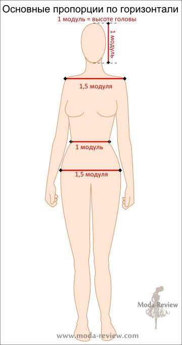 Основные параметры в горизонтальной плоскости — ширина плеч, талии и бедер. Плечи и бедра равны по ширине, это 1,5 модуля. Талия на 1/3 уже, она равна 1 модулю.