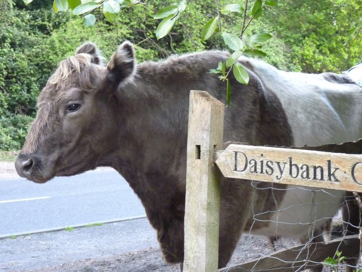 just passing! Daisybank Cottage New Forest
