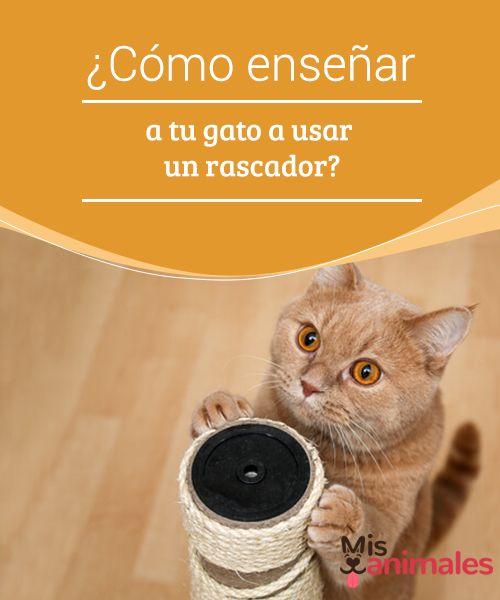 ¿Cómo enseñar a tu #gato a usar un rascador?  Los #felinos son hermosos… hasta que se afilan las #uñas con nuestros muebles. La buena noticia es que en el #mercado se venden unas #herramientas especiales para ello.