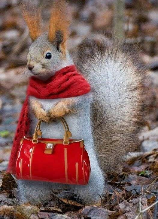 """* * """"Not sure wut all dis about, but I suppose  I could use de bag fur storing nutz and de scarf  to line me nest."""""""