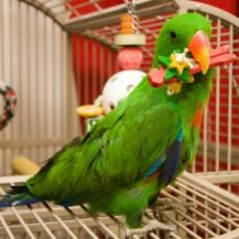 How to Make Homemade Toys For Birds | Here are some ideas for homemade or inexpensive toys that your parrots or parakeets will love