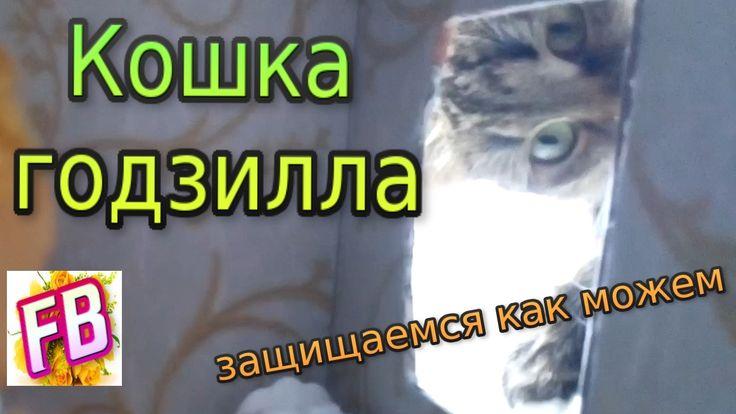 Кошка годзилла рвется в дом