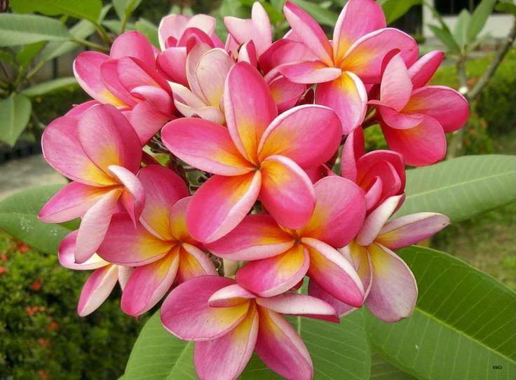 Смотреть картинки всех цветов с названиями