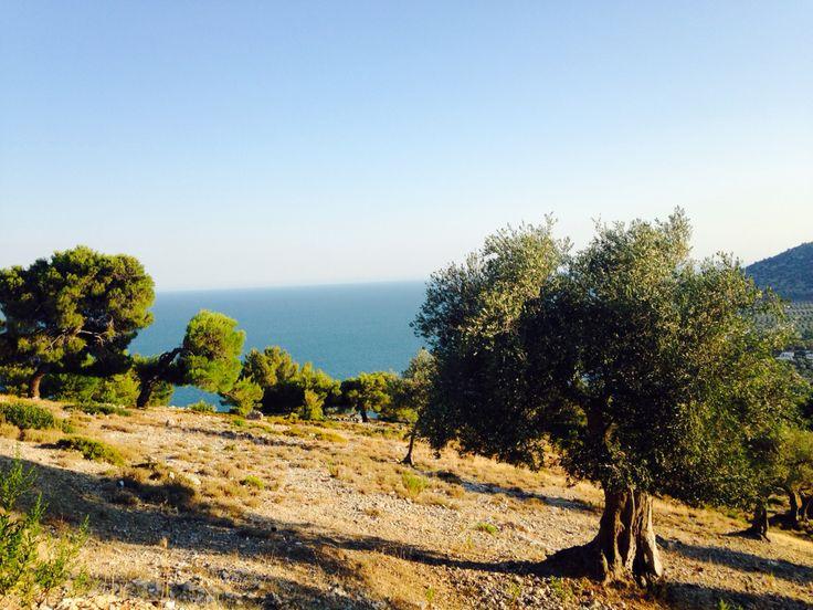 Uno splendido panorama delle bellezze naturalistiche di Mattinata, Puglia.