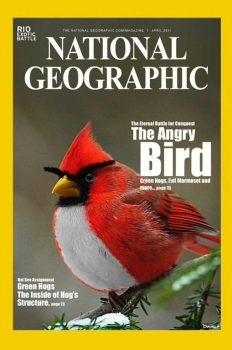 The Angry Bird.
