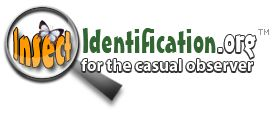 Insect Identification - Easy way to find out what kind of insect you have found