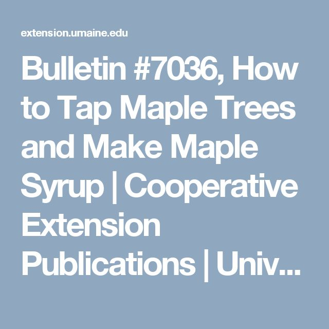 Bulletin #7036, How to Tap Maple Trees and Make Maple Syrup | Cooperative Extension Publications | University of Maine