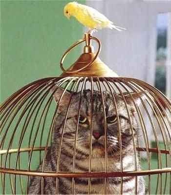 : Gatto in gabbia