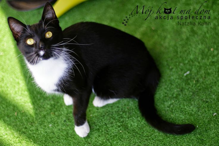 Mój kot ma dom - Akcja społeczna: IV.095