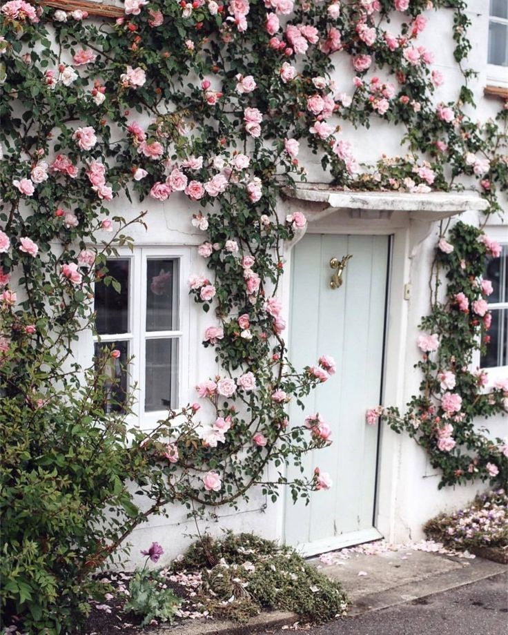 The Alternative Wife The Power Of Flowers Beautiful Flowers Climbing Roses Flowers