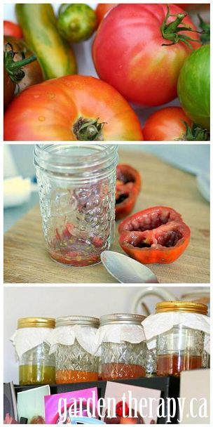 how to save heirloom tomato seeds, gardening, Step 2 scoop the guts into a jar Fill with 1 4 cup water and leave to ferment in a warm place