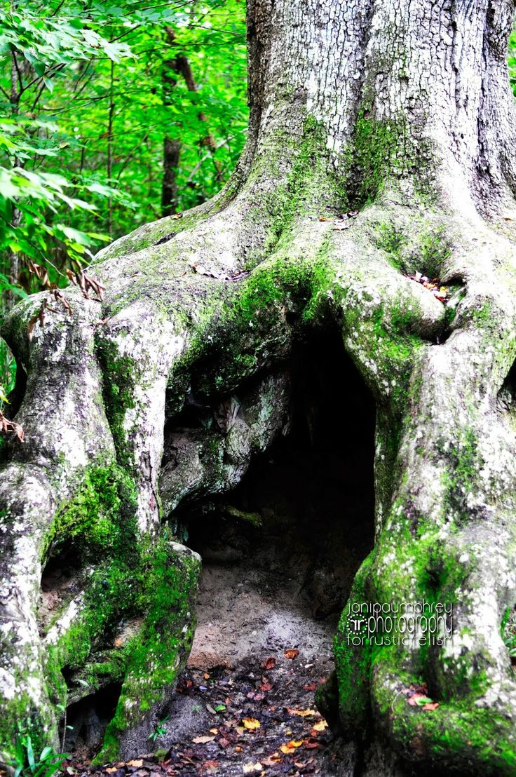 The Hiding Tree - rustic relish: Historic Blakeley State Park - Spanish Fort, Alabama