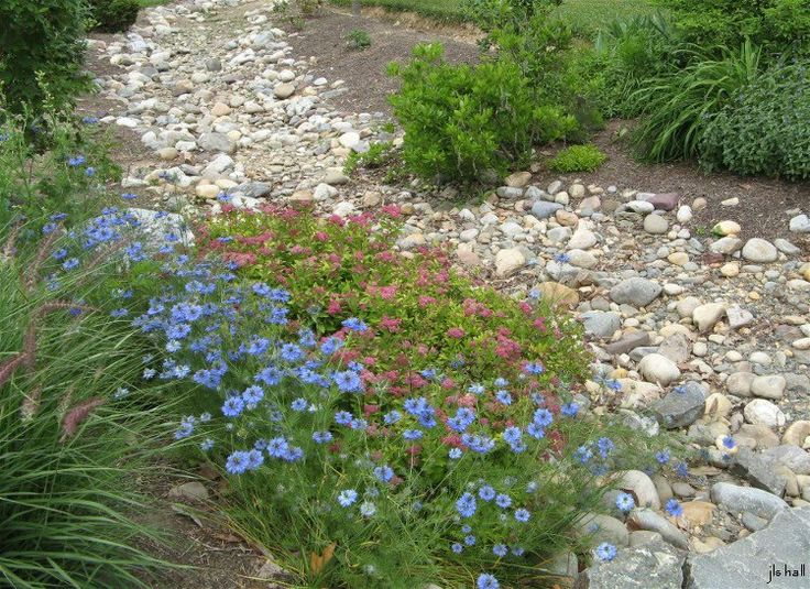 Image result for irises trickle in a dried-up riverbed