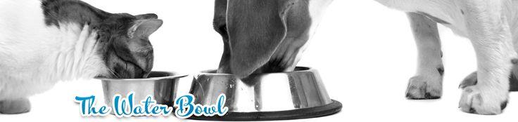 Skin Allergies in Dogs | Flea Bite Hypersensitivity | Flea Allergy Dermatitus