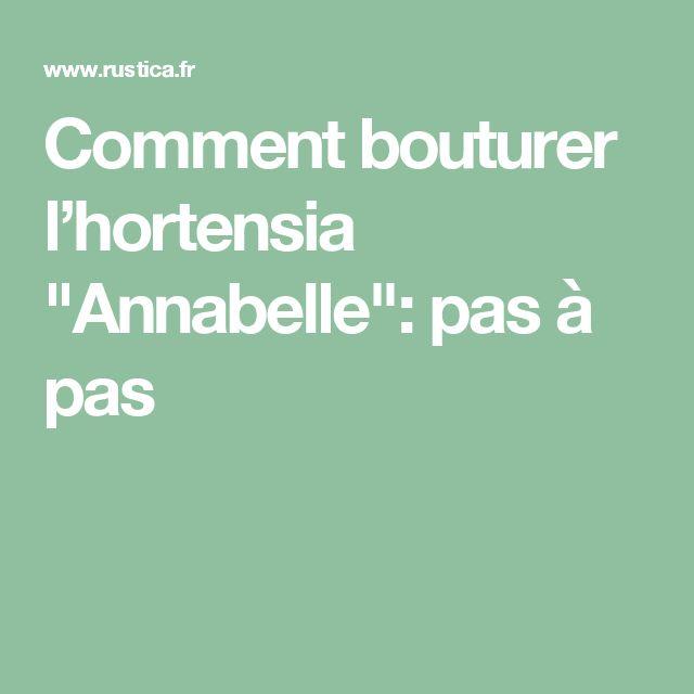 """Comment bouturer l'hortensia """"Annabelle"""": pas à pas"""