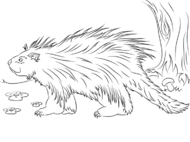 Porcupine realist coloring page coloring pages for Porcupine coloring page