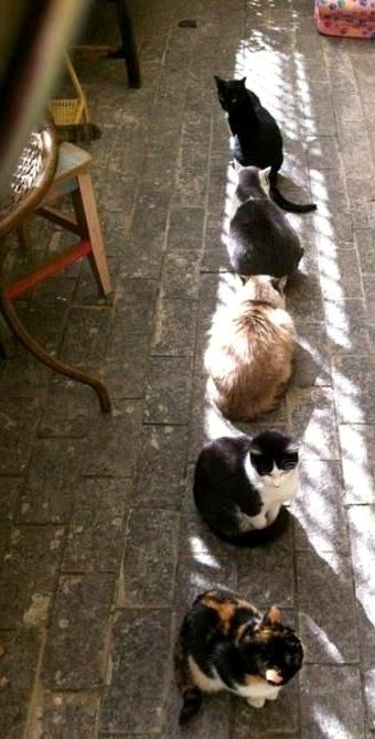sun bathing Cats... reminds me of my old cat tiger. He used to sunbathe and turn his little face up to the warmth ♡