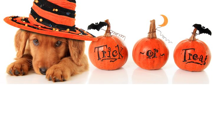 by Jo on the Go Don't let Halloween turn your pet into a scaredy-cat!   Halloween can be fun instead of frightening for your pet if you prepare accordingly. Here's how to keep your pet safe and happy on the scariest night of the year. Practice with Props Many pets are easily spooked by new and …