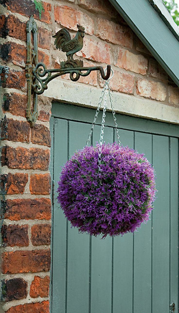best flores colgantes images on pinterest